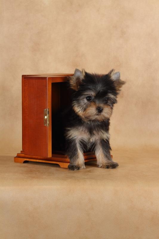 Продам/купить: машинка для стрижки собак moser type 140 в калининграде
